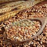 antica-varietà_grano-monocco